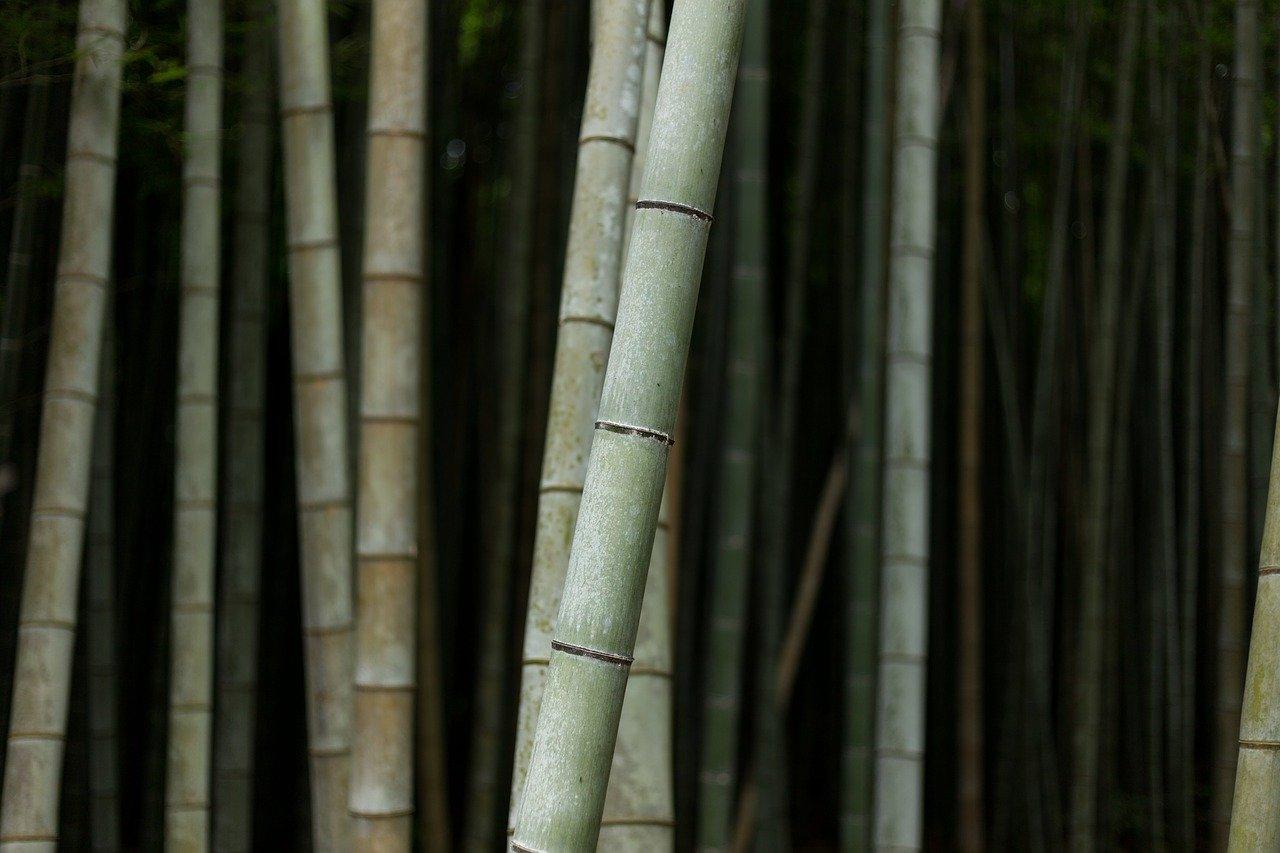 bamboos-1846479_1280%281%29.jpg